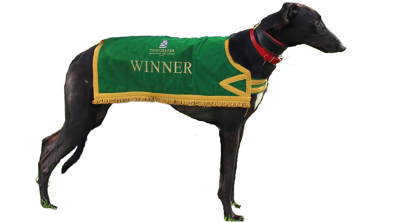 The claret cobbler greyhound